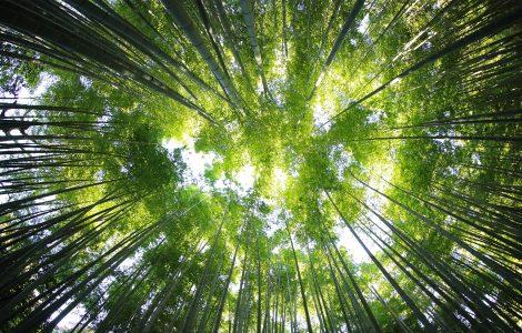 Comment grandir spirituellement?
